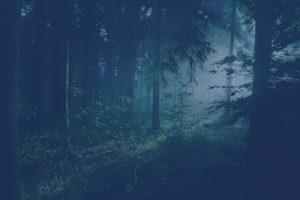 Blåtonad bild på skog där ljus silas genom stammar